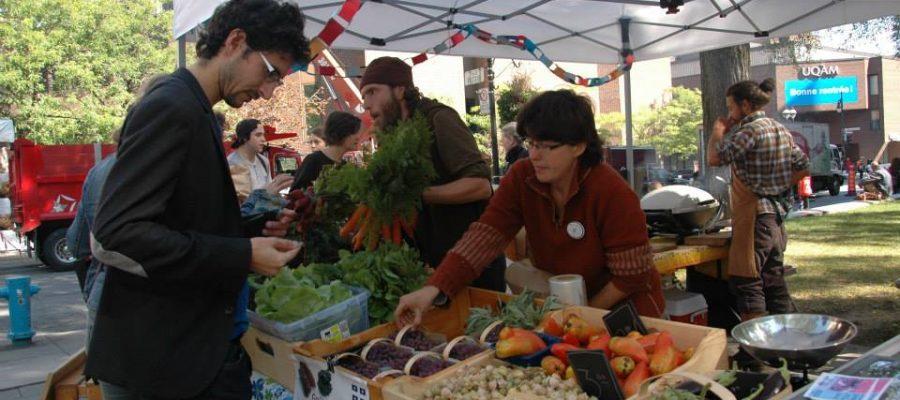 Photo de côté paysage montrant un kiosque du marché fermier devant l'UQAM. Une personne est devant le stand en le regardant et une personne derrière le stand s'apprête à lui donner un panier de bleuets. Les autres fruits et légumes incluent notamment des cerises de terre, des laitues, des carottes.