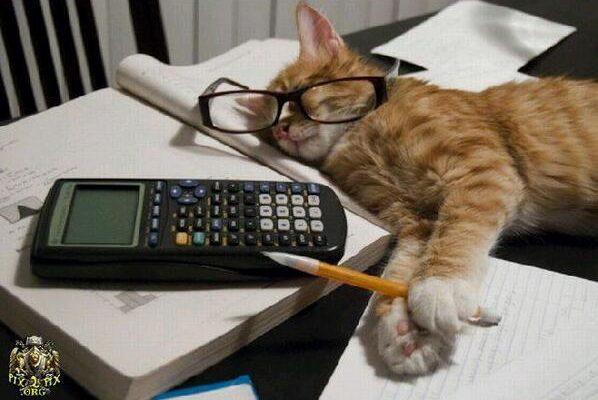 Image d'un chat qui dort sur des cahiers, avec des lunettes accotées sur sa tête vis-à-vis de ses yeux. Entre ses pattes avant il y a un crayon. Un calculatrice est sur la page opposée.